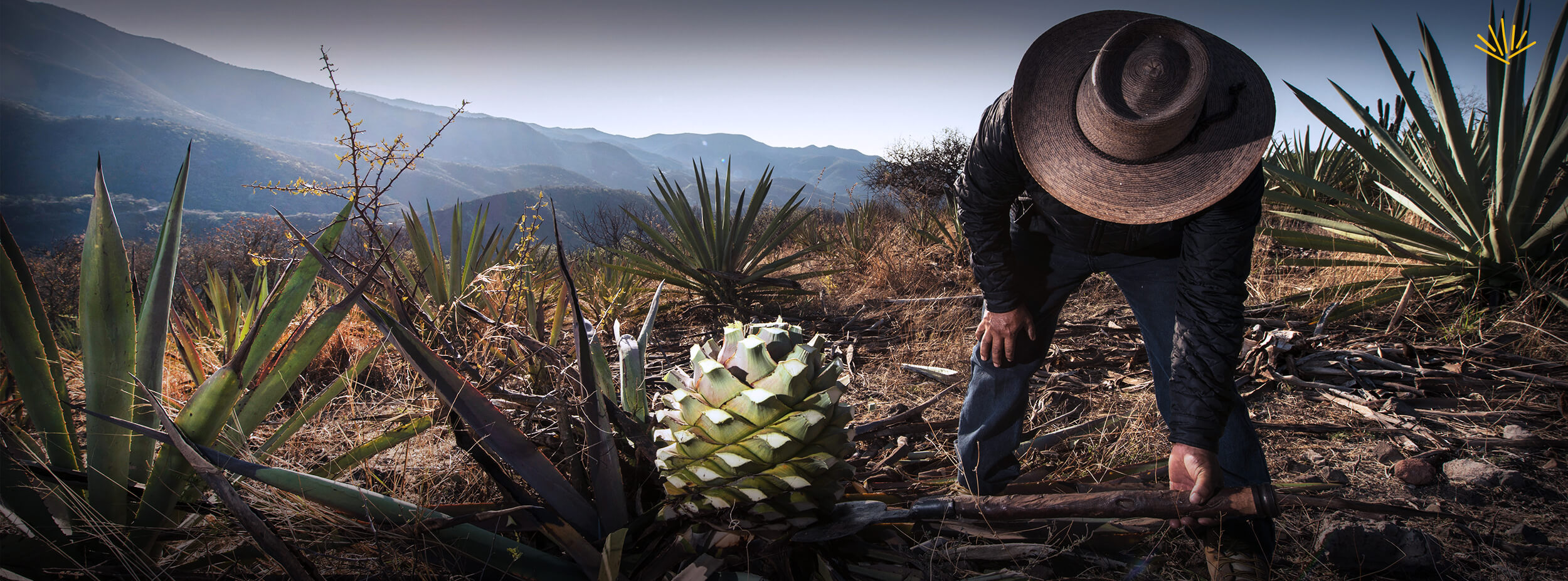 Mezcal, one of the world's most complex distillates